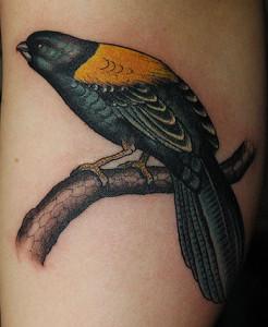 birdarm